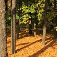 На ковре из желтых листьев... :: Ветер Странствий.орг