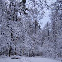 Лыжня :: Анна Воробьева