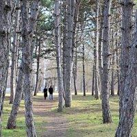 Прогулка в  парке :: Валентин Семчишин