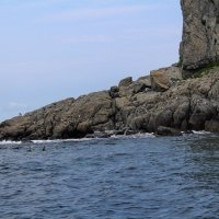 В бухте Алексееева место постоянного обитания тюленей-ларга. :: Марина Белоусова