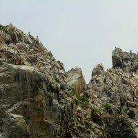 бакланы на скалах :: Марина Белоусова