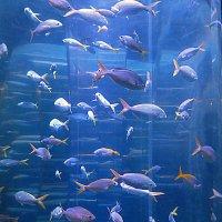 Рыбки :: Валентина Жукова