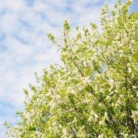 Весна неизбежна! :: Андрей Вестмит