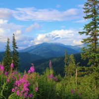 Когда цветёт иван-чай :: Сергей Чиняев