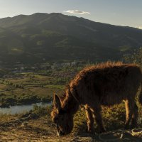 вот такой неожиданно лохматый грузинский ослик :: Осень