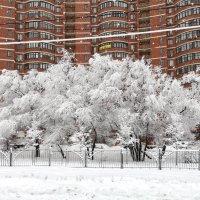 Зима у метро Беляево ) :: Константин Фролов