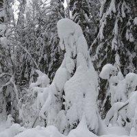 холодно елочке зимой :: Галина