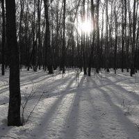 Привыкнув к ЧБ зиме ;-) :: Андрей Лукьянов