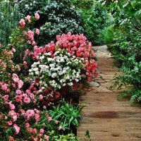 В Ботаническом саду уже весна :: Aida10
