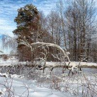 Зимний пейзаж :: Александр Шмалёв
