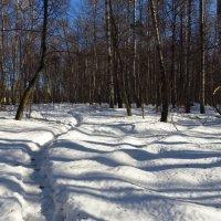 Вариации на тему приближения весны (мои полчасика перед работой) :: Андрей Лукьянов