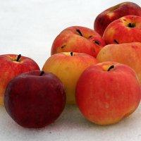 Про яблоки на снегу... :: Александр Резуненко