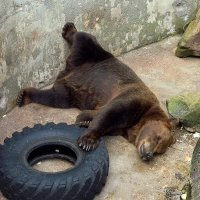 А мне лежать и спать охота... :: Сергей Карачин