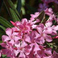 Цветы украшают жизнь! :: Валерий Подорожный