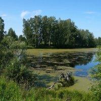 Я снова возле старого пруда Стою в раздумьях на исходе лета.. :: Галина Кан