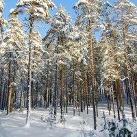 зима :: shperl