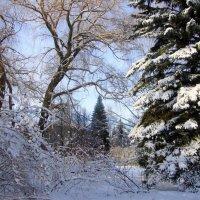 зимы прекрасный уголок... :: Галина Флора