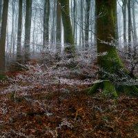 в заколдованном зимнем лесу :: Elena Wymann
