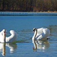 На городском озере...Аугсбург :: Galina Dzubina