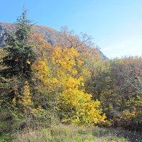 Осень в Ялте :: Валентин Семчишин