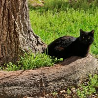 Я не ученый кот, я черный... любитель корешков крученых :: Светлана