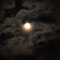 Луна, луна :: Светлана