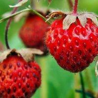 Про витамины, лето и десерт... :: Александр Резуненко