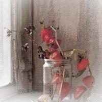 Этюд с физалисом на старом окне :: Ольга Винницкая (Olenka)