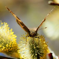 опять бабочки...2 :: Александр Прокудин