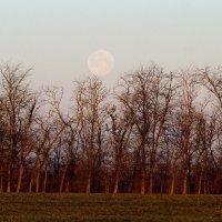 Лунный закат :: Дина Дробина