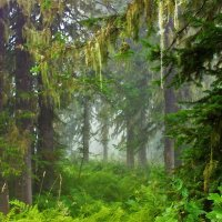 Дремучий лес :: Сергей Чиняев