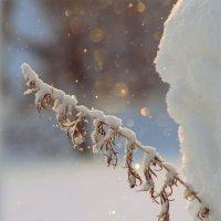 Снегопад. :: Вера Литвинова