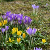 Цвета весны :: Heinz Thorns