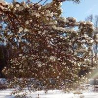 Лучик солнца в феврале :: Елена Павлова (Смолова)