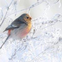 В лучах зимнего солнца :: Влад