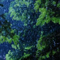 Дождь :: Serega Денисенко