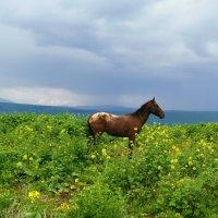 Конь :: Александр Деревяшкин
