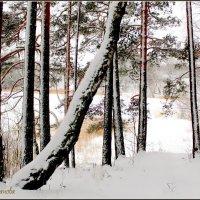 Зима в Смоленском поозерье. :: Ольга Митрофанова