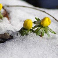 зимние цветы :: юрий иванов