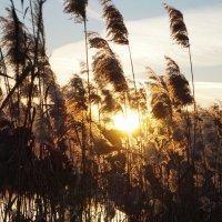 Солнечный ветер :: Дина Дробина