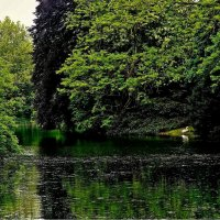 белый лебедь на пруду :: Александр Корчемный