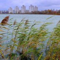 озеро на окраине города :: Александр Прокудин