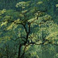 ВЕСЕННИЙ СОН  .(Из серии-И снятся деревьям сны разноцветные) :: ЛЮБОВЬ ВИТТ
