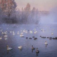 Рассвет на Лебедином озере. :: Галина Шепелева