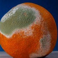 апельсиновый глобус :: Валентина M