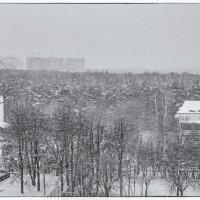 Снег летящий :: Виталий Авакян