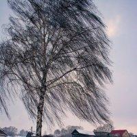 Люблю берёзку русскую, то светлую, то грустную... :: Евгений Юрков