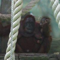 Зоопарк :: <<< Наташа >>>