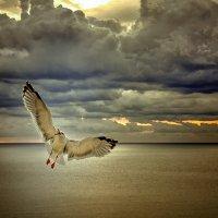 Только в полете живут... :: Александр Бойко