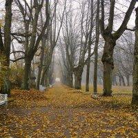 Осень в парке :: Елена Кейнянен